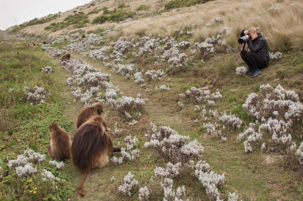 Gelada photography