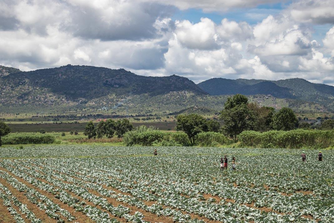 Angolan crops