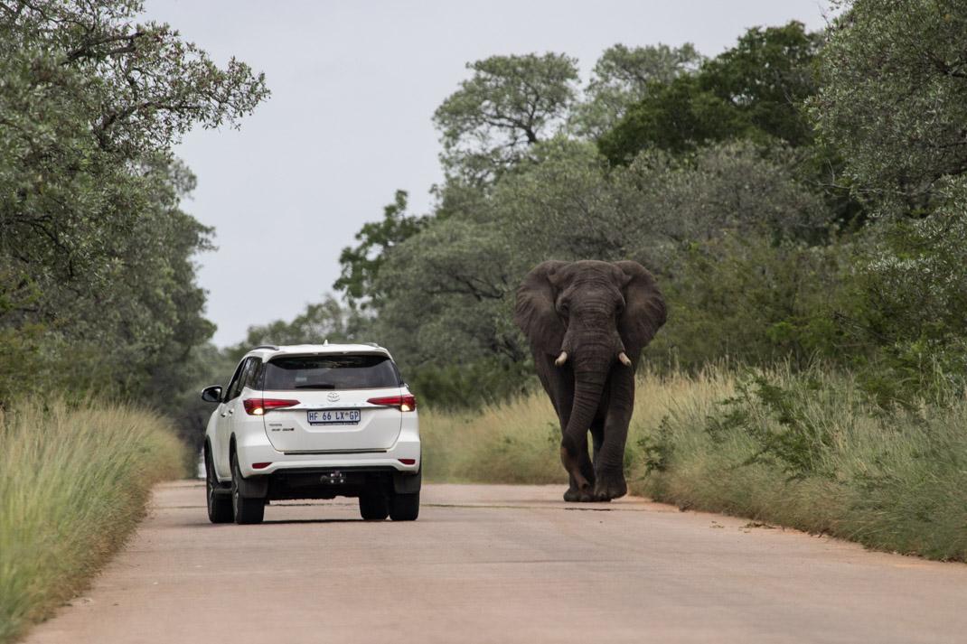 Elephant by a car at Kruger National Park