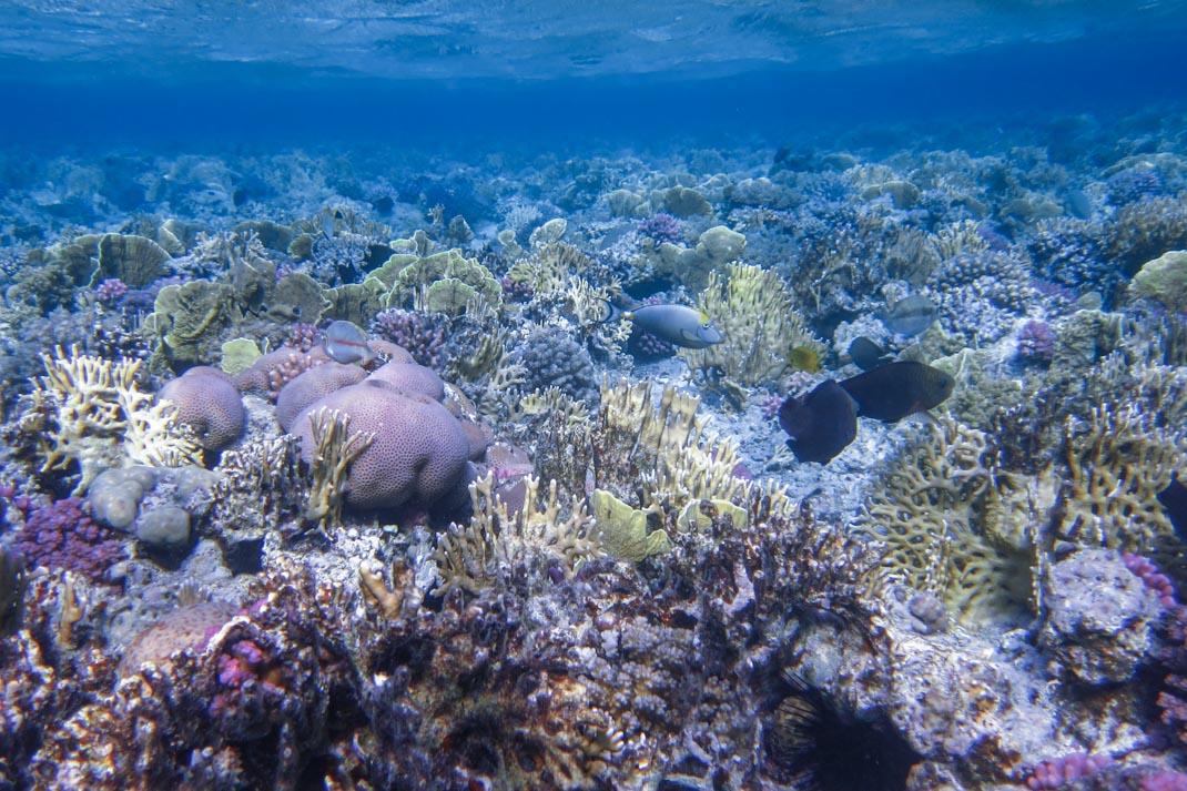 Marsa Mubarak reef - The Red Sea Egypt