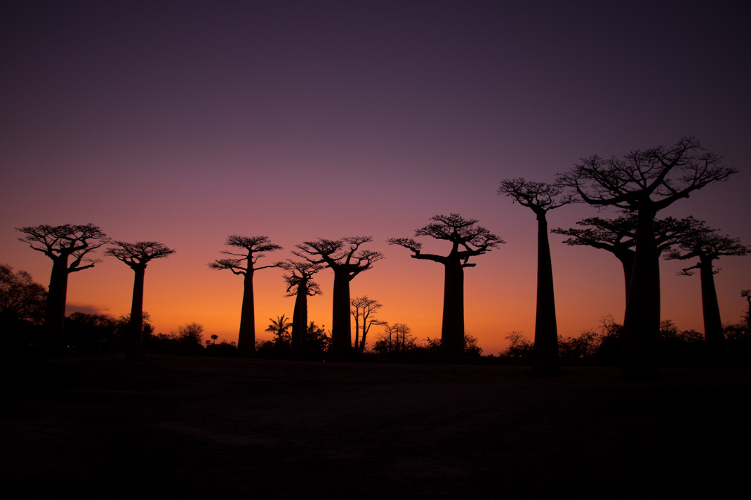 Avenue of the Baobabs colourful sunset afterglow