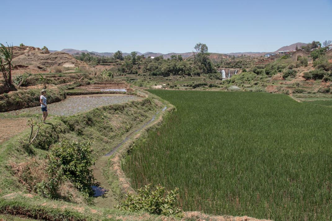 Scenery on route to Tsiribihina River