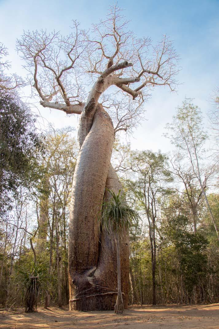 love baobab