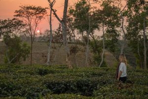 Shumshernugger Tea Estate sunset - Bangladesh