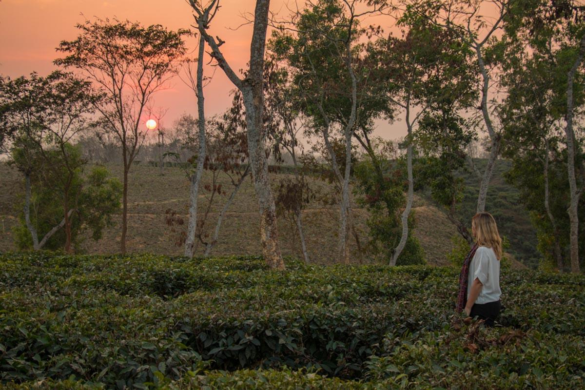 Shumshernugger Tea Estate sunset - Bangladesh