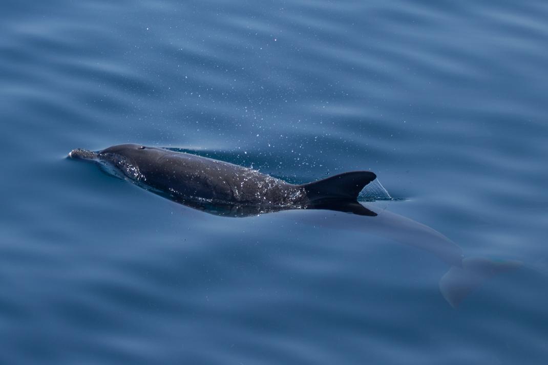 Dolphin swim-by