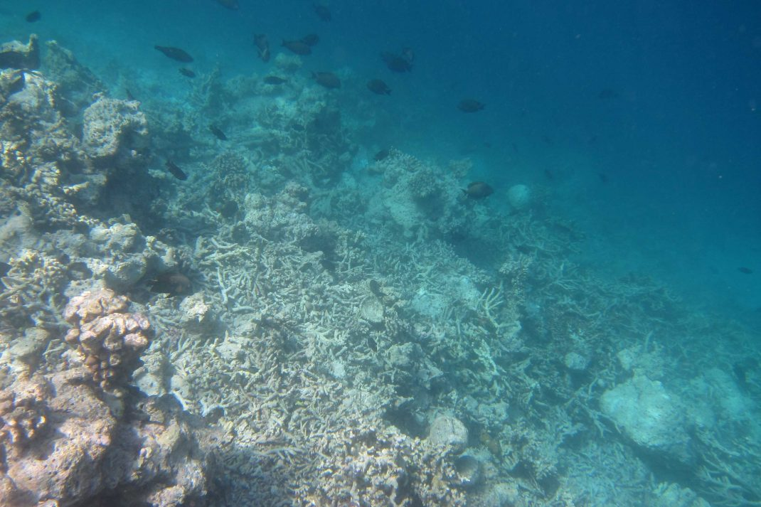 Kaafu Reef