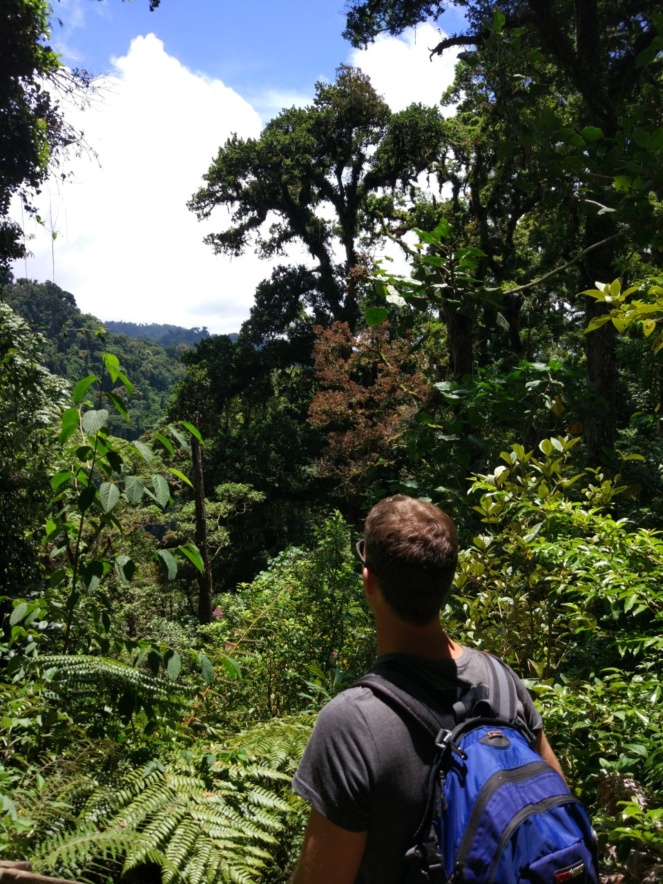 In search of the Resplendent Quetzal - Boquete, Panama