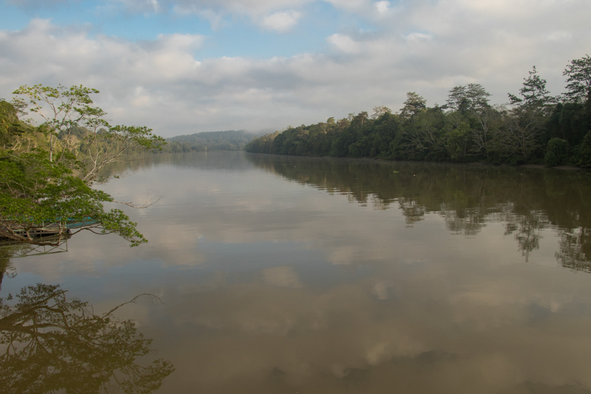 Lower Kinabantangan - Borneo