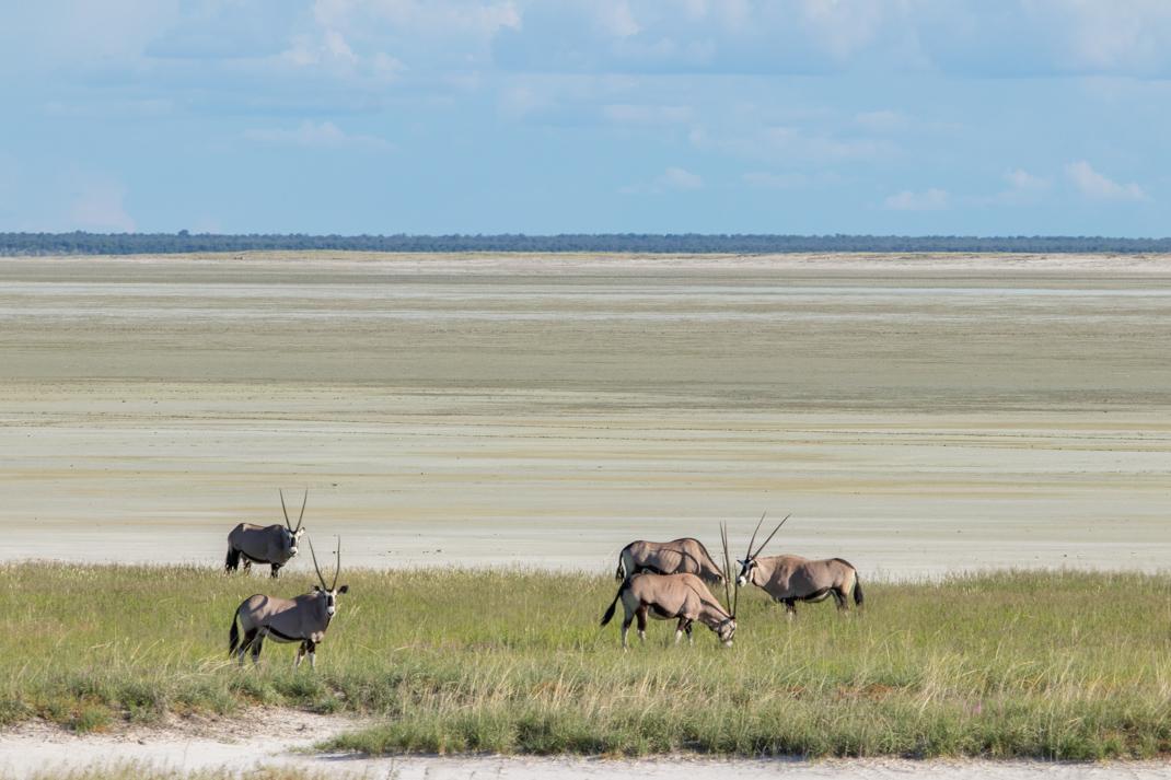 Oryx landscape, Etosha National Park