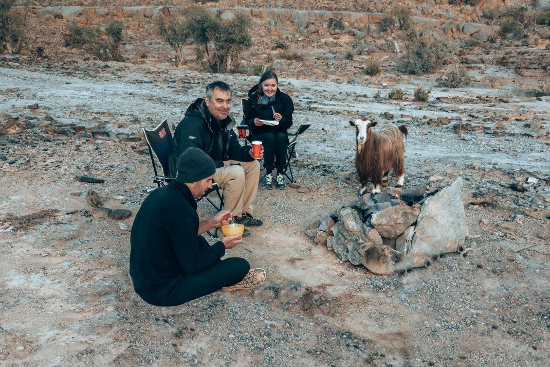 road trip in Oman goat