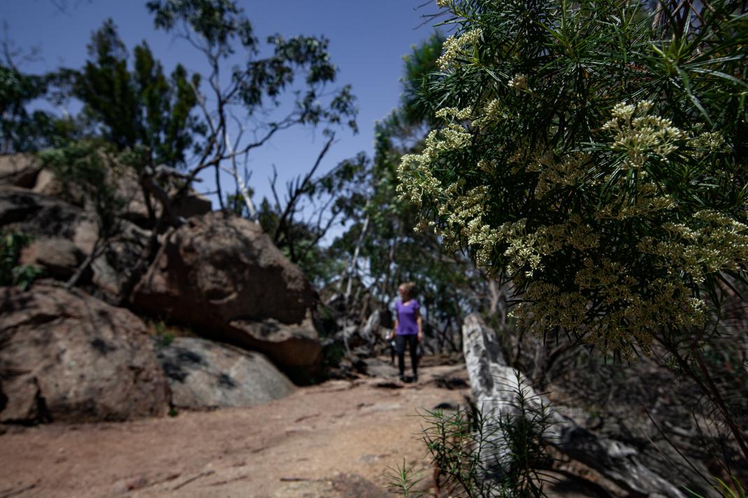 Flinders Peak Trail in the You Yangs