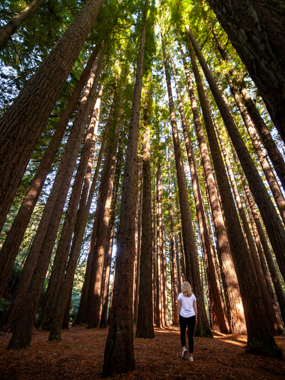 Imbi at The Redwoods, Great Otway National Park