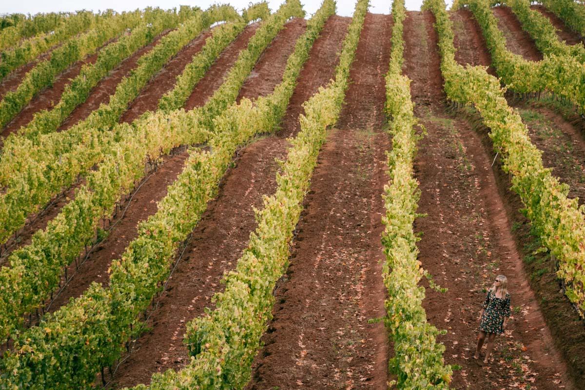 South Africa Winery Tokara
