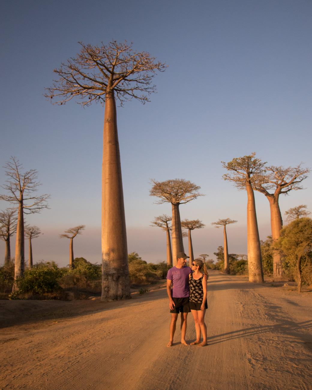 Golden hour at the Alleè Des Baobabs