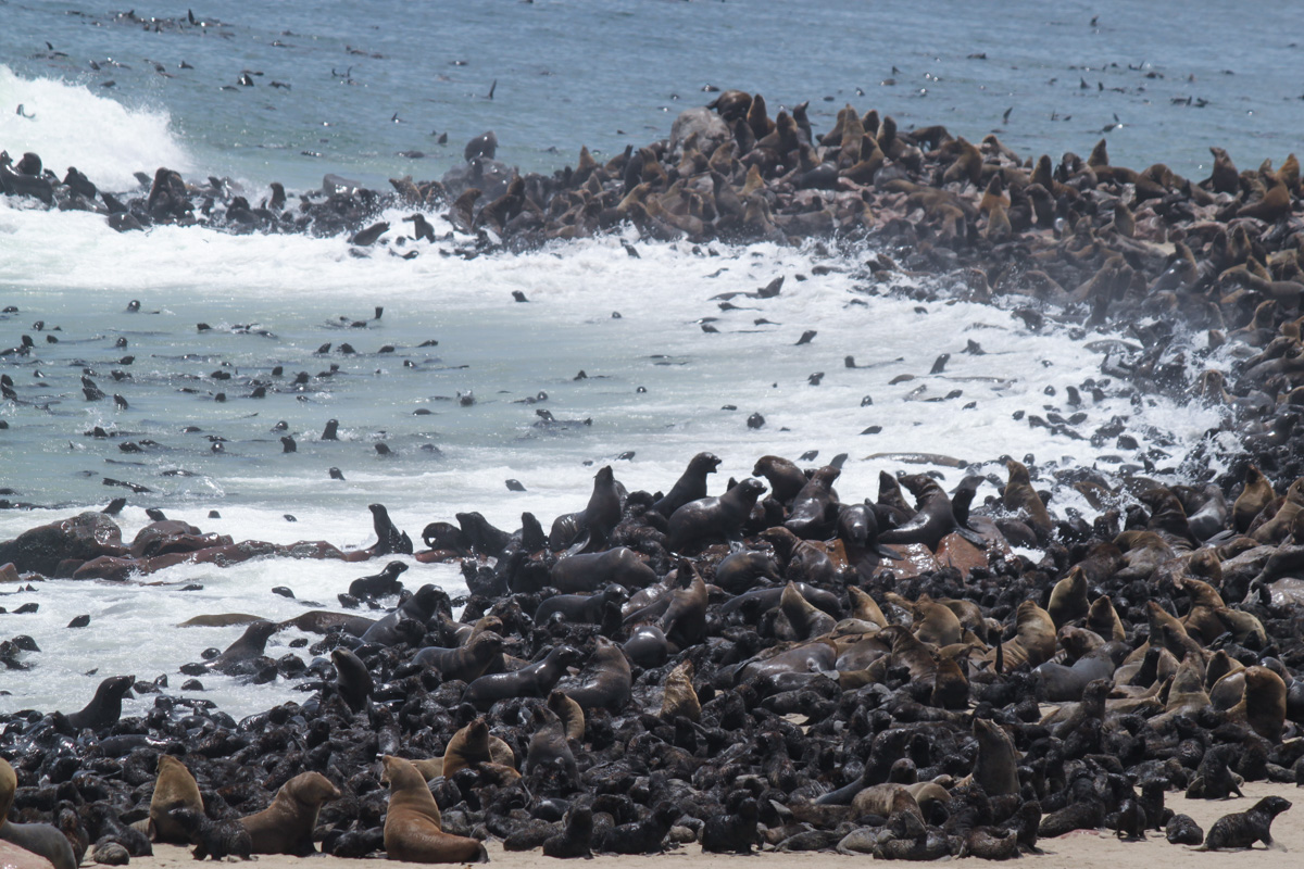 Highlights of Namibia - Cape Cross Seal Colony