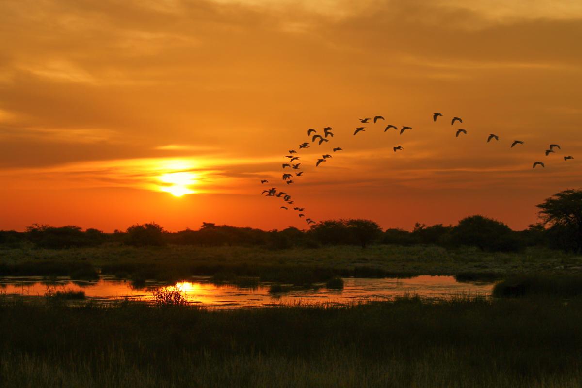 Etosha National Park Waterhole Sunset
