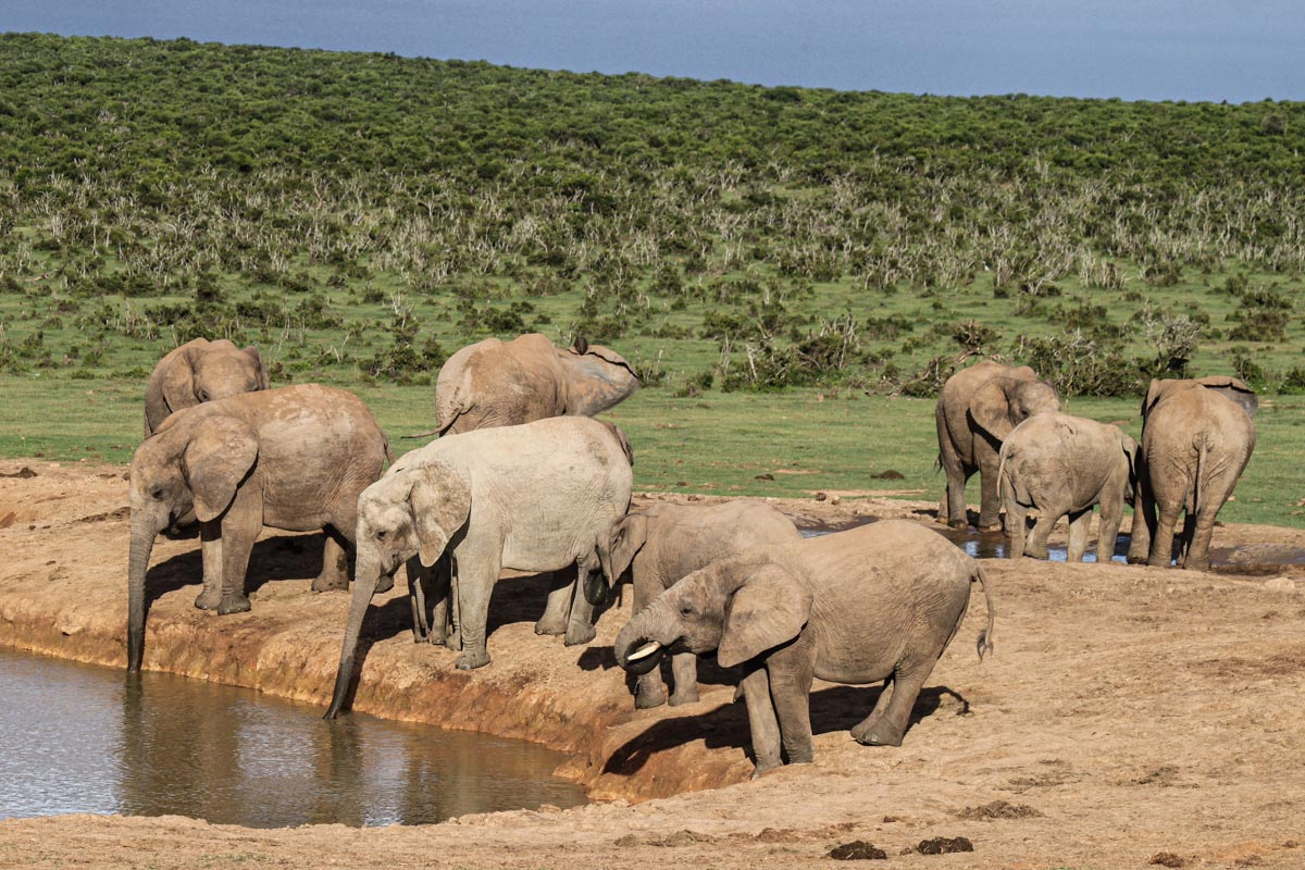 Addo Elephant Park - Things to do in South Africa