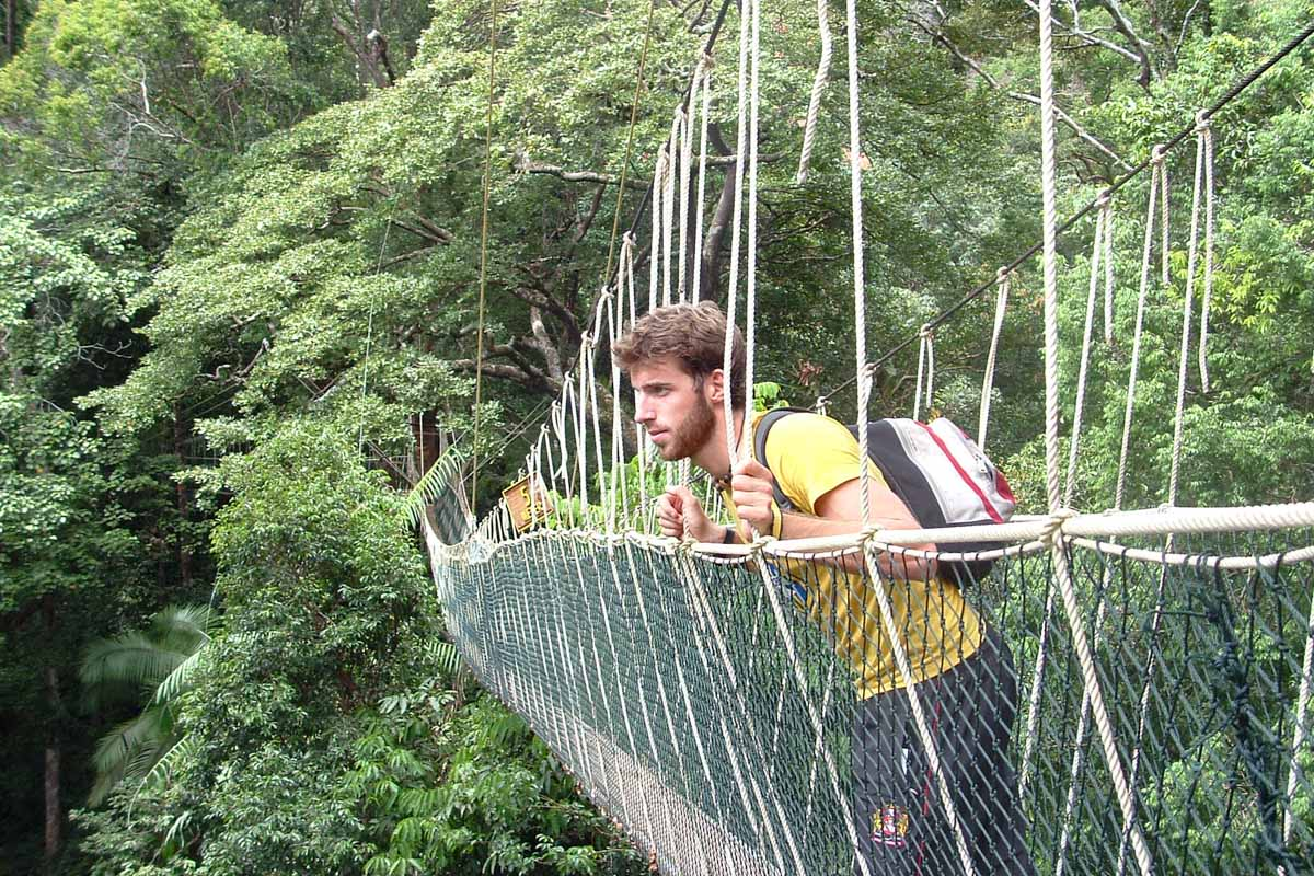 Taman Negara Canopy Walk - Places you must see in Malaysia