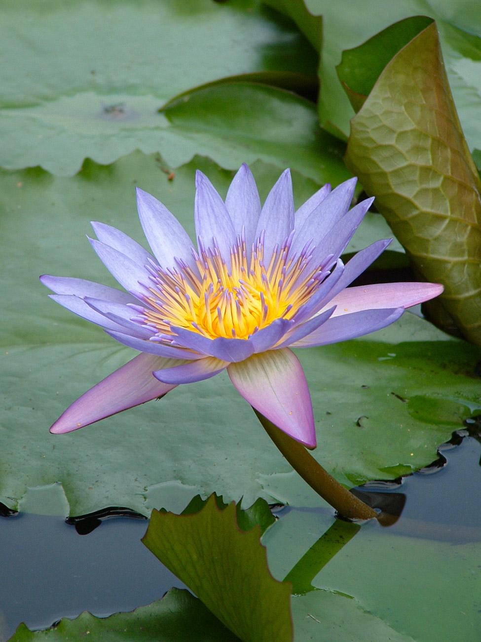 Perdana Botanical Gardens (Lake Gardens) - Kuala Lumpur
