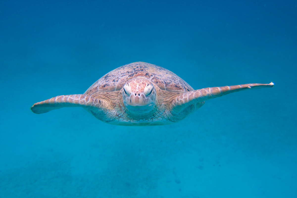 Turtle in Coral Bay Malaysia
