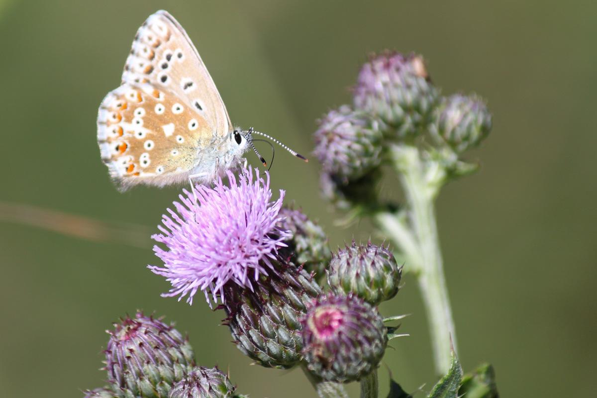 Butterfly on the Tré le Champ to La Flégère Hike