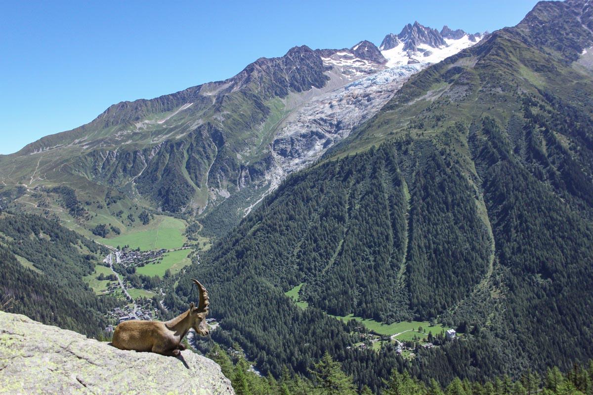 Hiking the Tré le Champ to La Flégère trail - Alpine Ibex