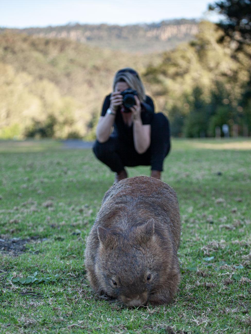 Wombats in Bendeela Recreation Area Campsite