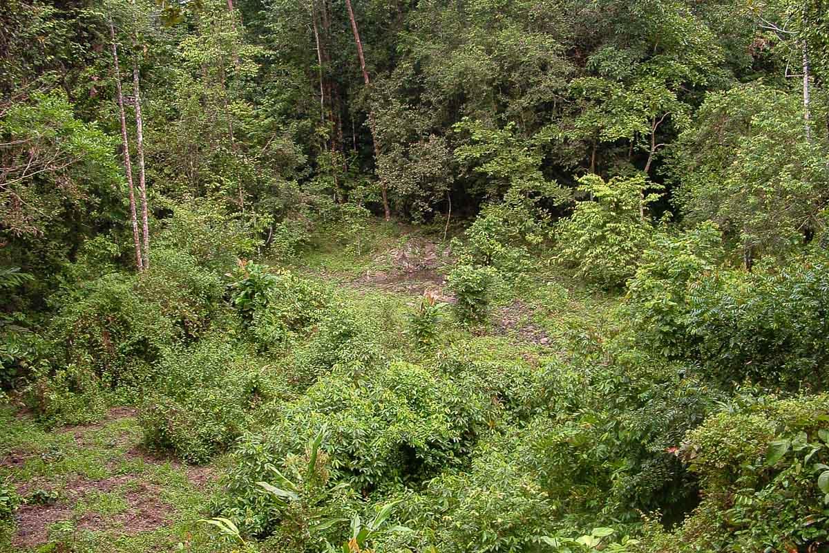 Mineral lick in Taman Negara