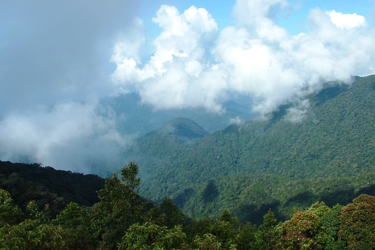 Hiking in the Cameron Highlands
