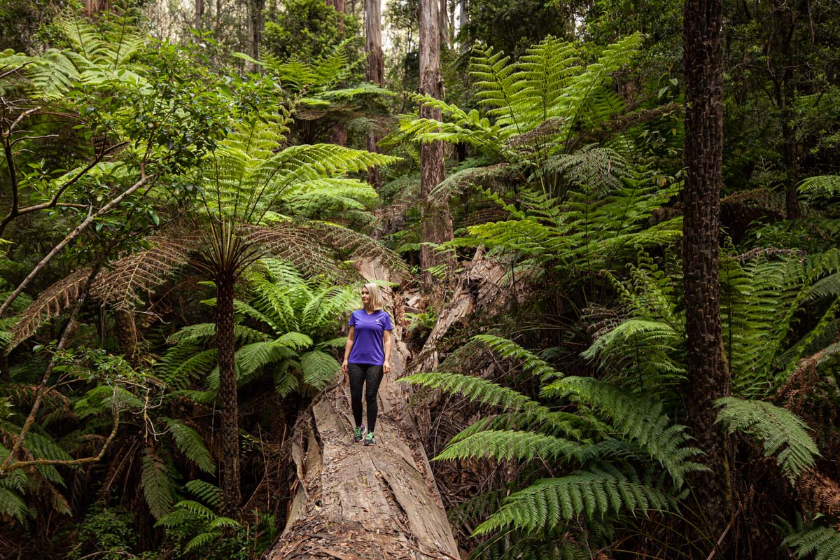 ULTIMATE GUIDE TO THE WALKS & WILDLIFE OF THE DANDENONG RANGES