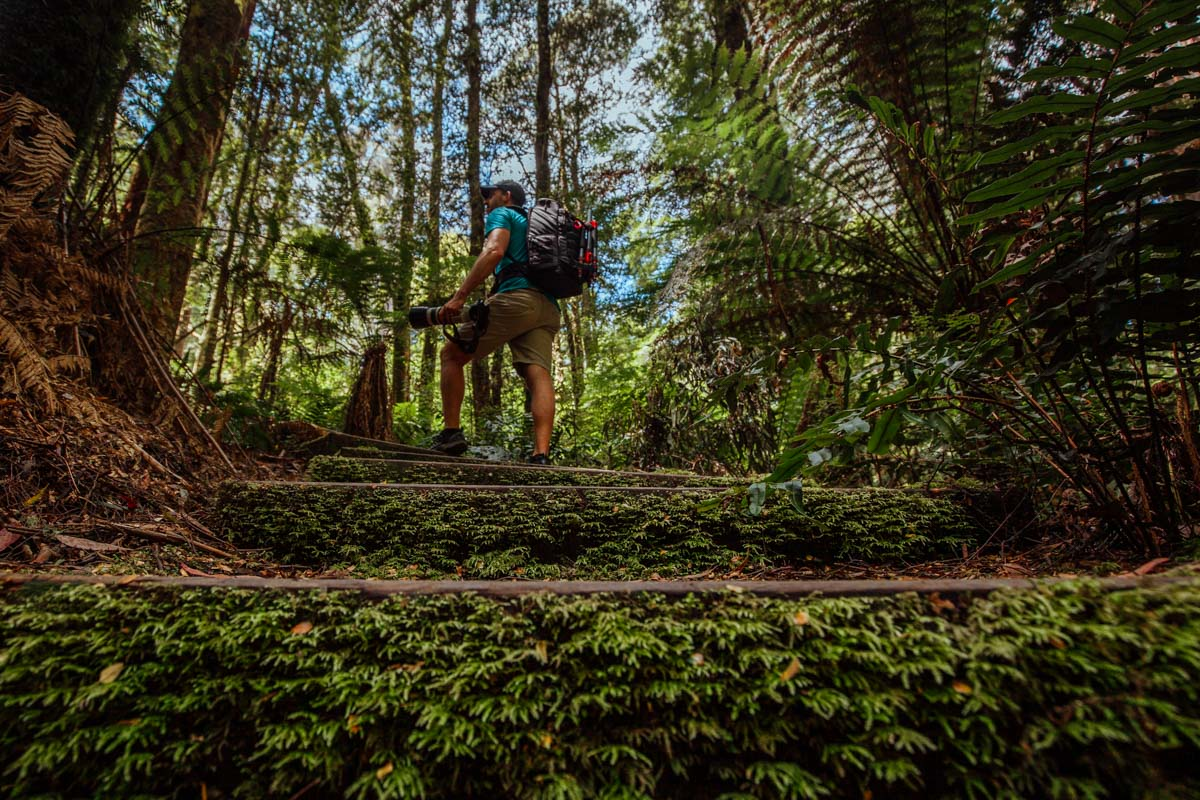 Hiking to Little Aire Falls, Great Otway National Park