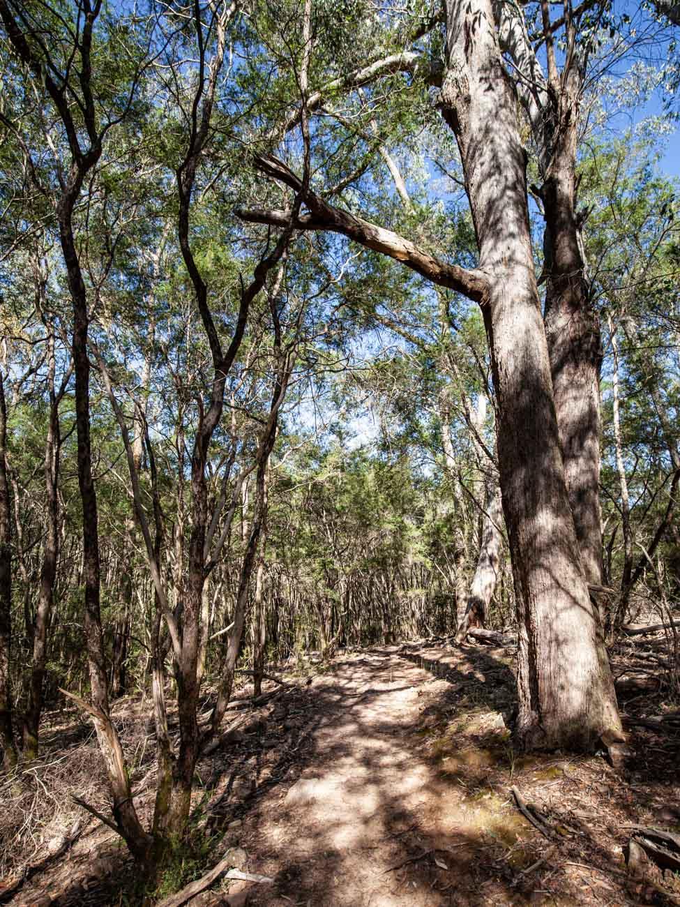 Neds Gully Track - Cathedral Range Hike