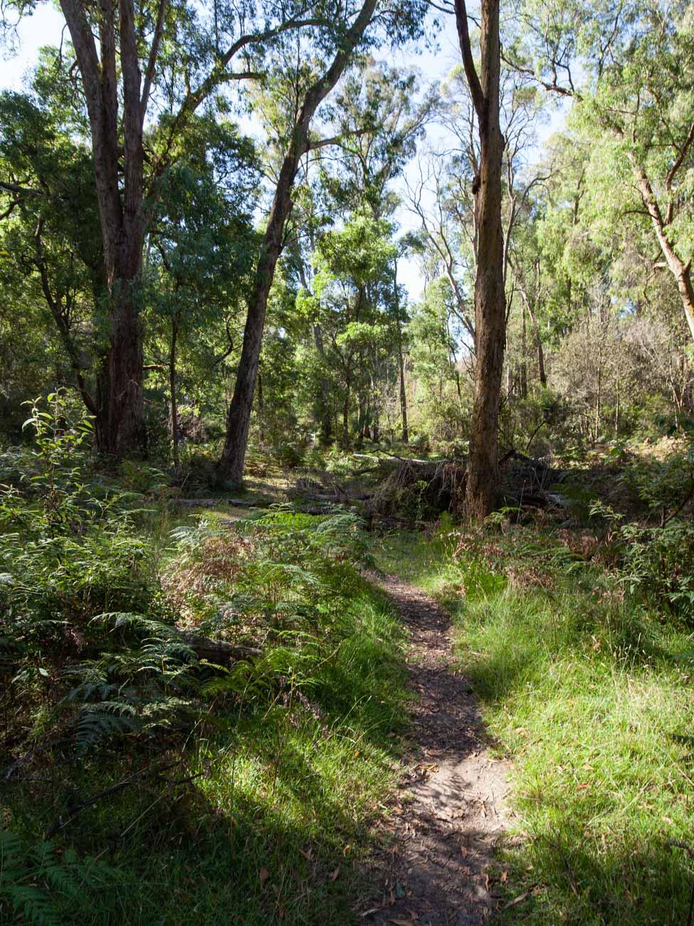 Cathedral Range - Ridgeline Circuit - Little River Track 1