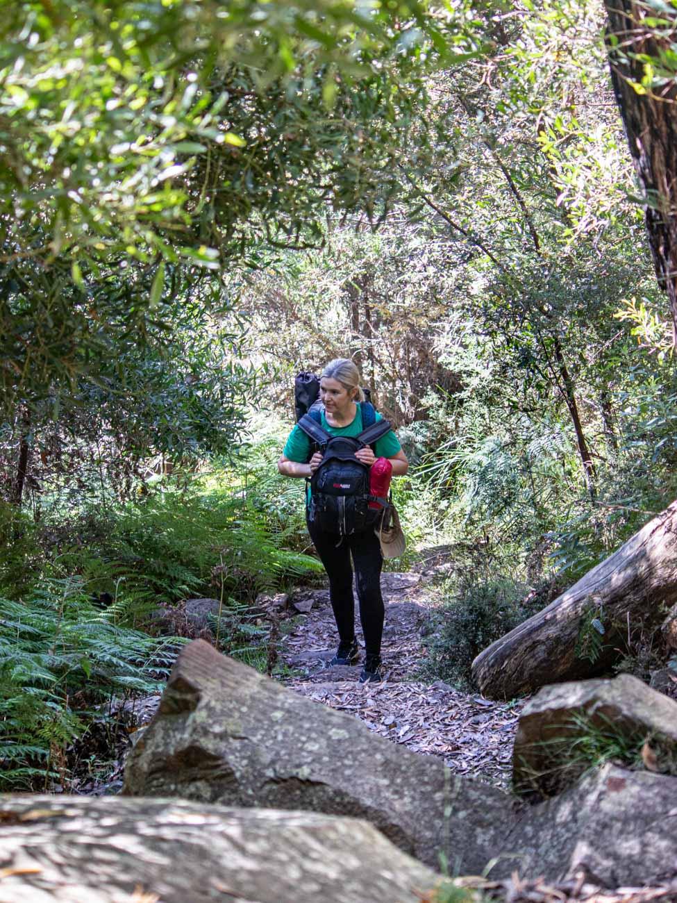 Jawbone Creek Track