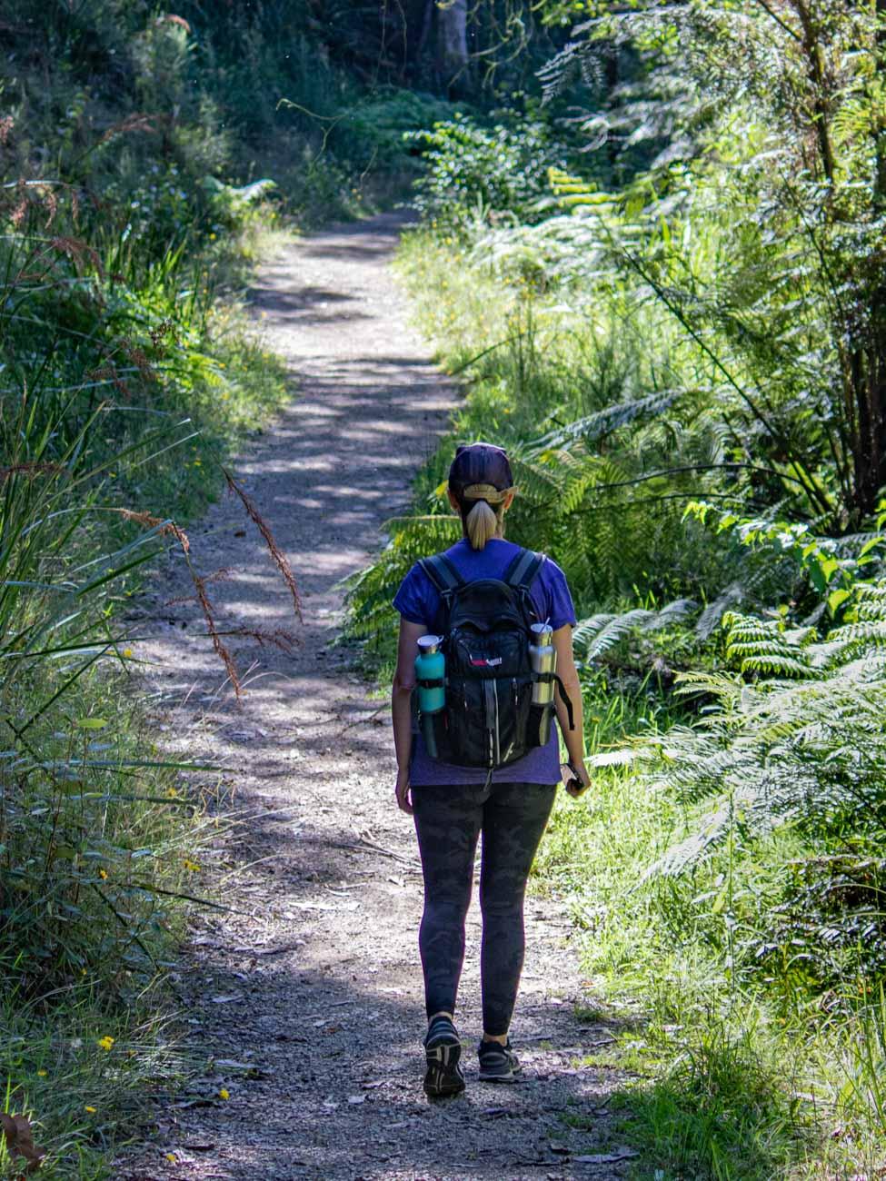 Tree Fern Gully Trail