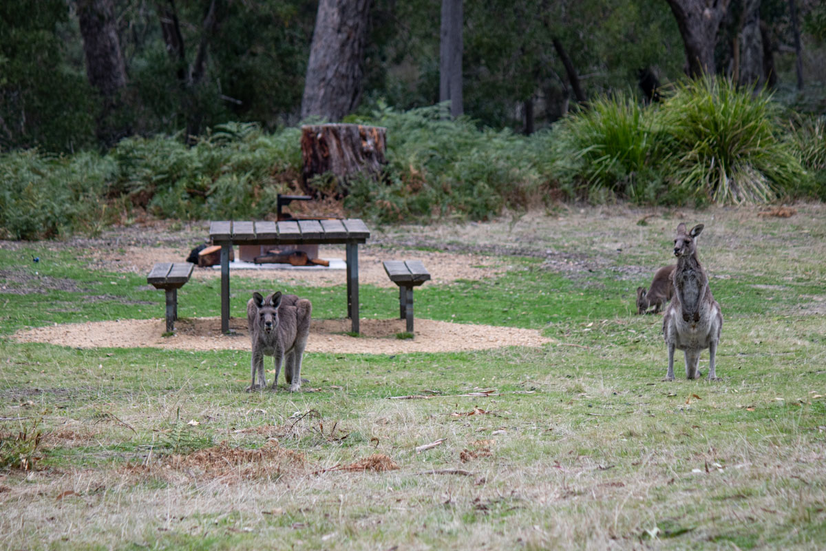 Roo's at Wannon Crossing Campground