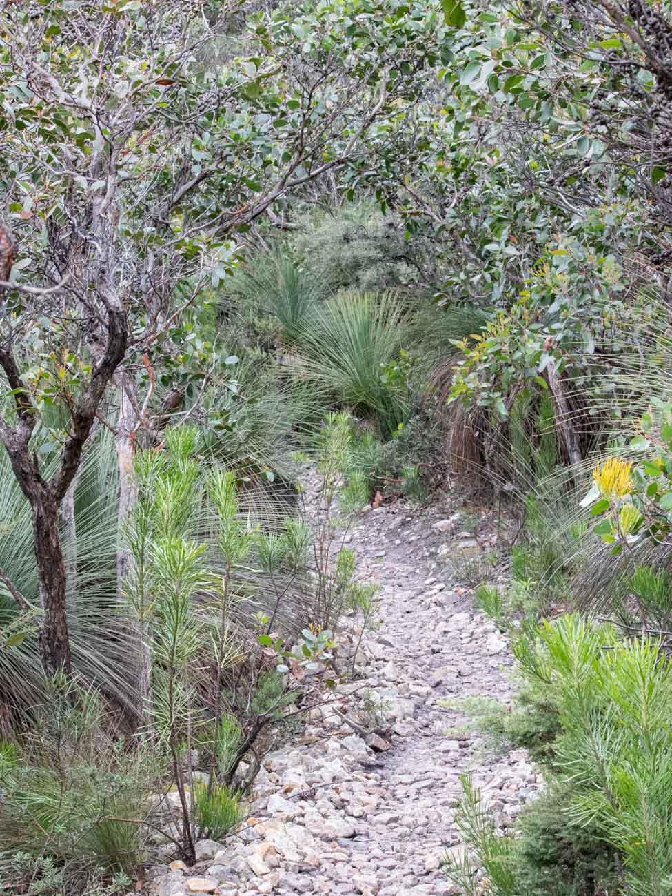Mount Abrupt Track