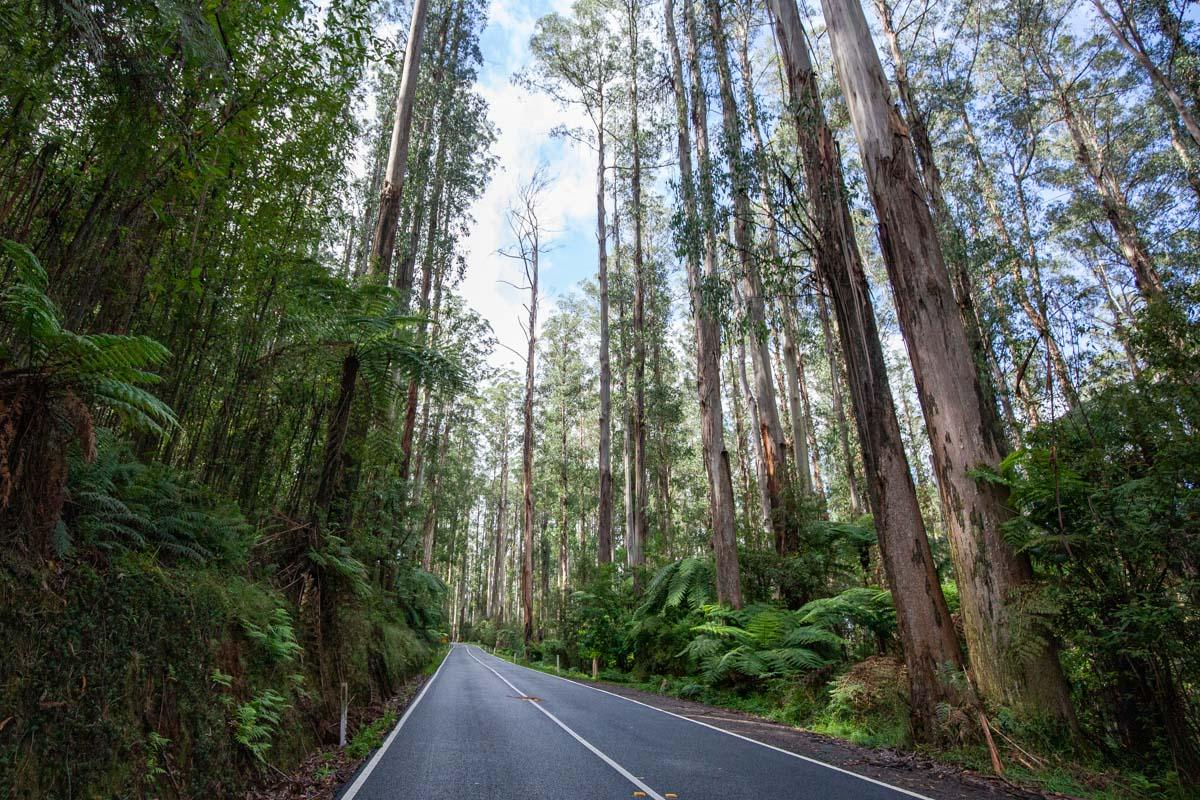 Driving Black Spur Drive - Yarra Ranges