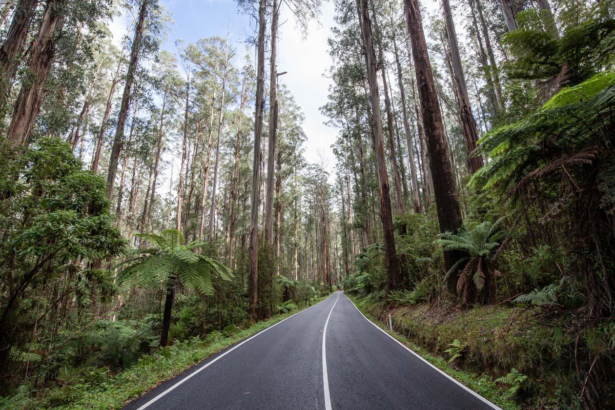 Black Spur Drive - Yarra Ranges