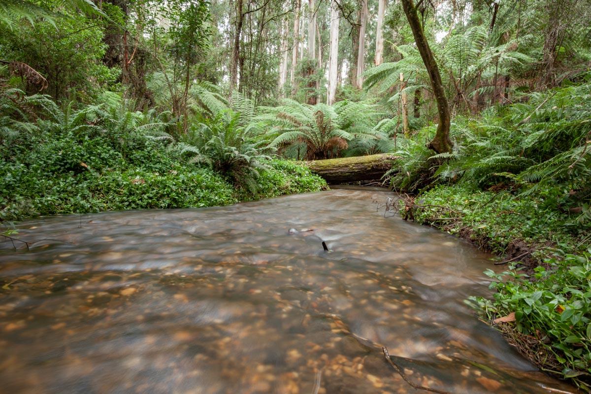 Dandenong Ranges Tourist Track - Sassafras Creek
