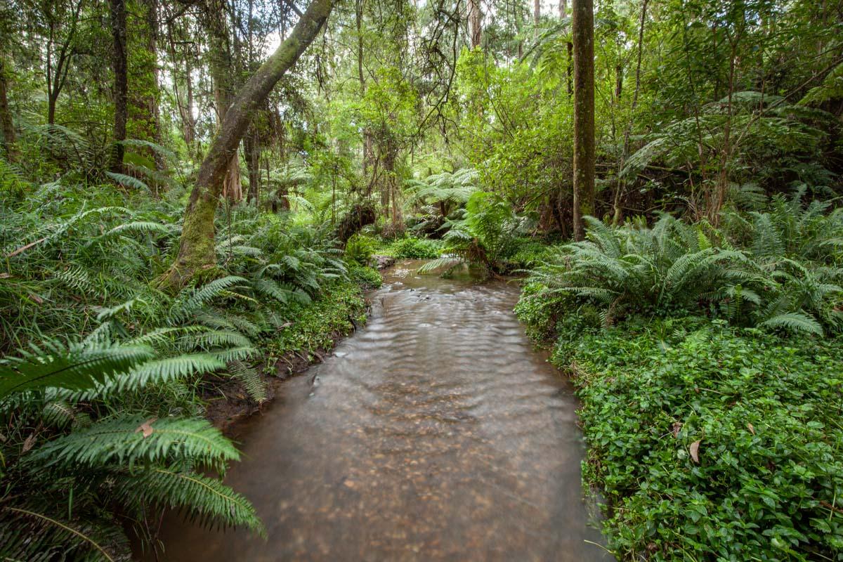 Sassafras Creek - Dandenong Ranges