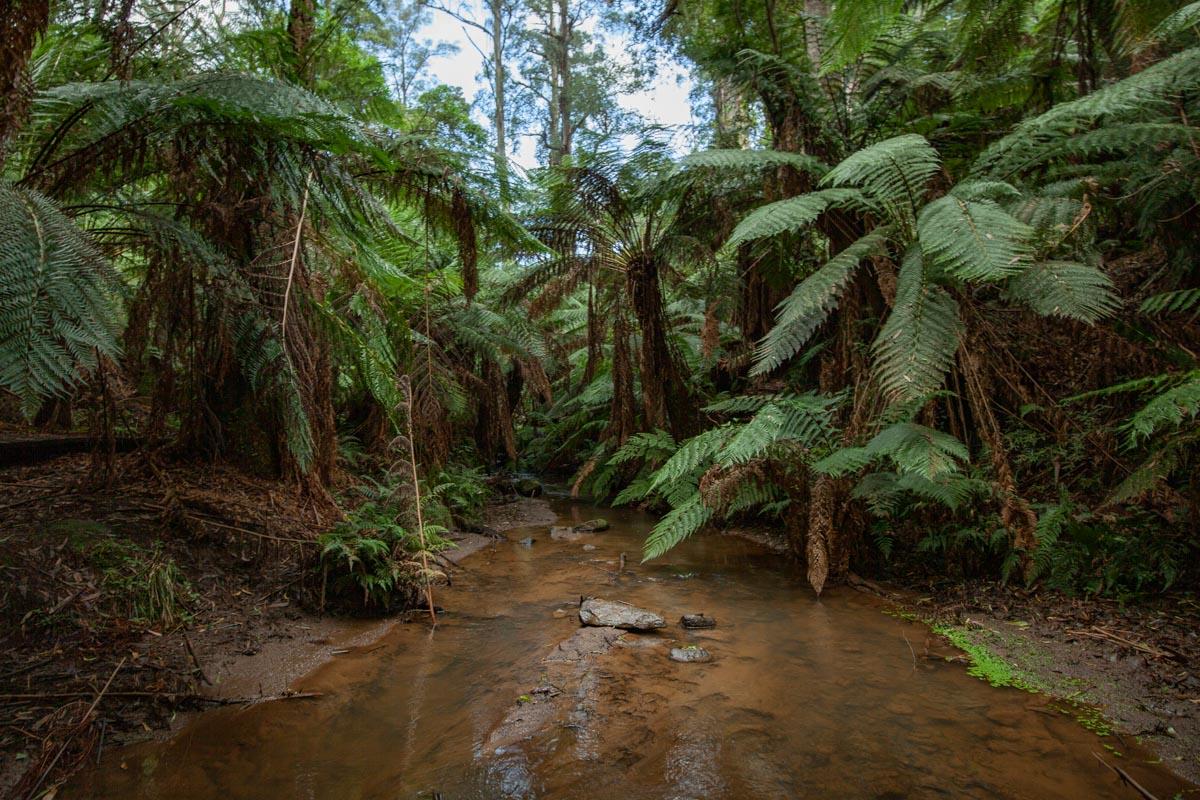 Menzies Creek - The Dandenongs