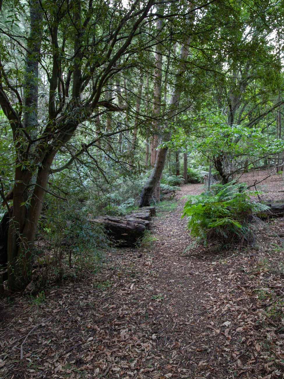 Menzies Creek Trail woodland