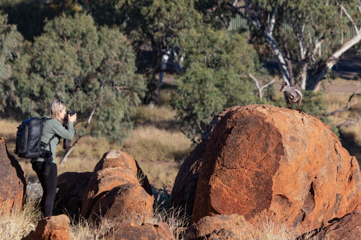 photographing Black Footed Rock Wallaby -Olive Pink Botanic Garden