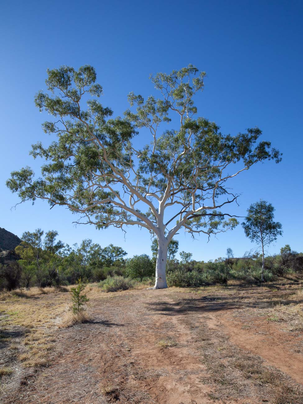Ghost Gum Lookout - Trephina Gorge Nature Park